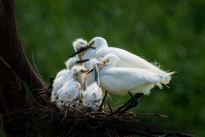 Maternal Love, Wu  Hung Sen , Taiwan