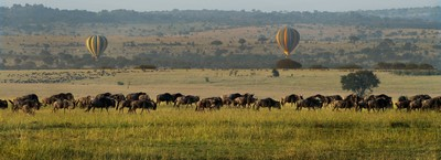 Wildebeests And The Balloons, Shanbhag  Pramod Govind , India
