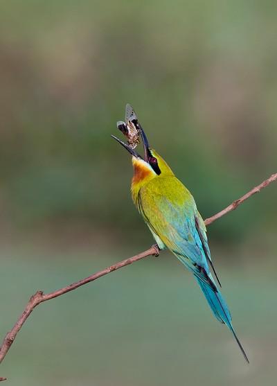Tossing The Catch, Shanbhag  Pramod Govind , India