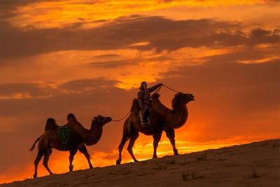 Sunrise Camel Walk, Boytell  Kerry , Australia
