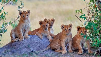 Group Photo, Rao  Shreyas , India