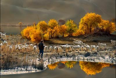 Shepherd In Autumn, Pang  Kwan Wai Simon , Hong Kong