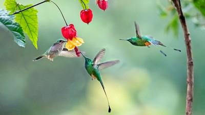Hummingbird 03, CHAN  H.W. , Hong Kong