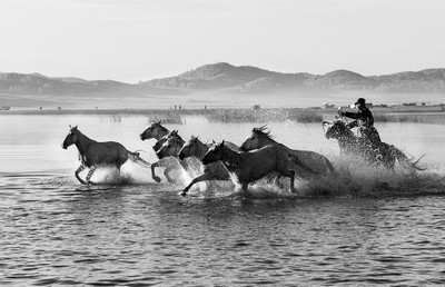 Horses In Water 91, Kwan  Phillip , Canada