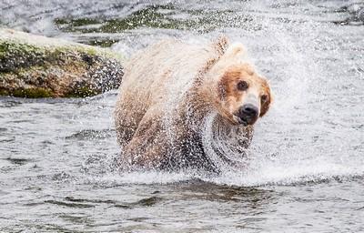 Bear Swirl 25, Kwan  Phillip , Canada