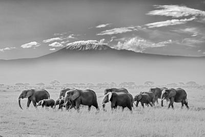 Elephants Family, Lin  Yong , China