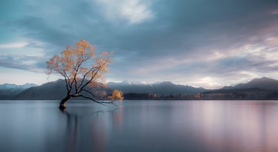 The Lone Tree, Tiong  Chiong Soon , Malaysia
