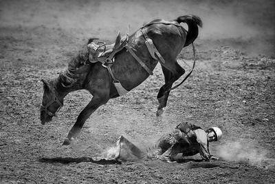 Cowboy 9, CHEUNG  SINKAI , Australia