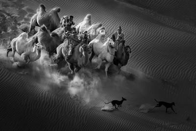 Camel Dog1, An  Xiping , China