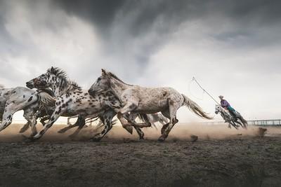 Lasso A Horse 4, Tong  Jiangchuan , China