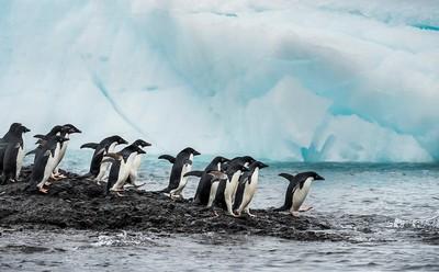Antarctic Penguin53, Ye  Danlei , Canada