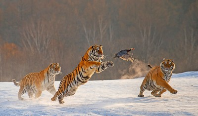Catch 31, YE  WEI , China
