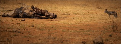 After The Poachers Have Left, Murray  Vivienne , South Africa