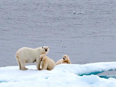 Polar Bear Family, Anderson  Margaret , New Zealand