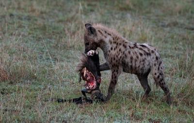 Hyena With Cutting Head 01, DUTTA  CHINMOY , India