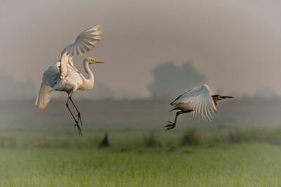 FLYING IN THE SKY, Ghosh Guha  Pinki , India