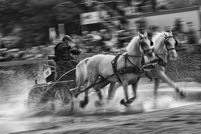 HORSE RACE, GORTNAR  STANE , Slovenia