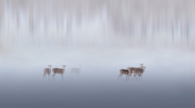 Reindeer In Forest, Li  CHUNLING , China